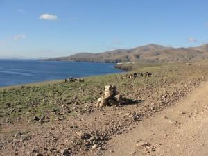 20150116111804 Rowerem powyspie - okolice Playa Quemada