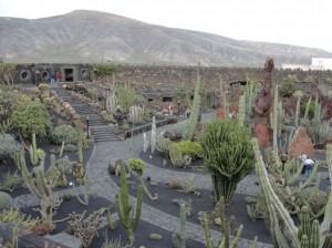 20150112123422 Ogród kaktusów w okolicy Guatiza