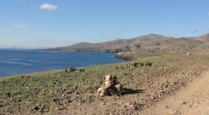 20150116111804 Rowerem po wyspie - okolice Playa Quemada