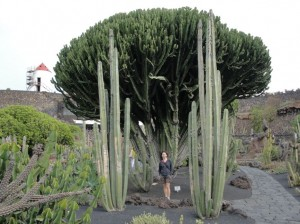 20150112124658 Ogród kaktusów w okolicy Guatiza
